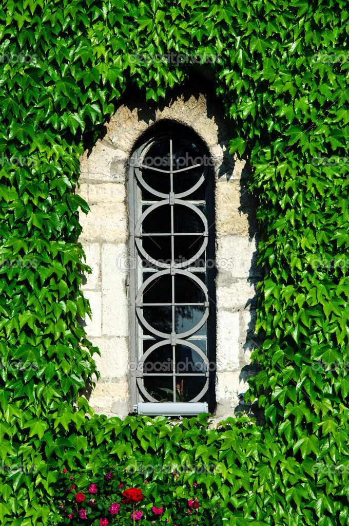 Hiden window in the leafs — Stock Photo #10664547