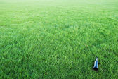 Bottle in the grass — Stock Photo