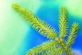 Pine tree branch — Stock Photo