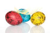 Colored Quail Eggs — Stock Photo