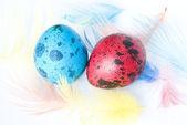 Huevos de codorniz coloreados — Foto de Stock