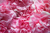 Pink flower petals — Stock Photo
