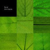 Leaf patterns — Stock Photo