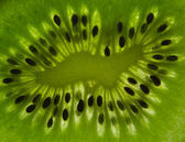 Backlighted kiwi slice — Stock Photo