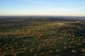 Oak plantation aerial view — Stock Photo