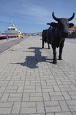 Latvian black cow of Ventspils - Latvia — Stock Photo