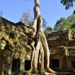 Roots at Ta Prohm temple — Stock Photo