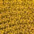 Stock Photo: Closeup of sun flower