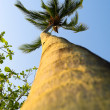 Palm tree — Stockfoto #9073570