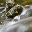Rocks in a streamlet - Stock Photo