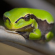 Frog - Stock Photo