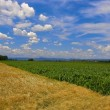 Fields against a blue sky — Stock Photo