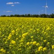 Rape field — Stock Photo #9074088