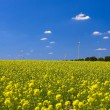 Rape field — Stock Photo #9074089