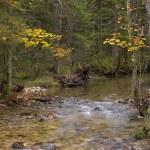 ������, ������: Small stream