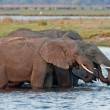 Group of wild elephants at a waterhole. — Stock Photo #9074913