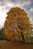 Herfst — Stockfoto