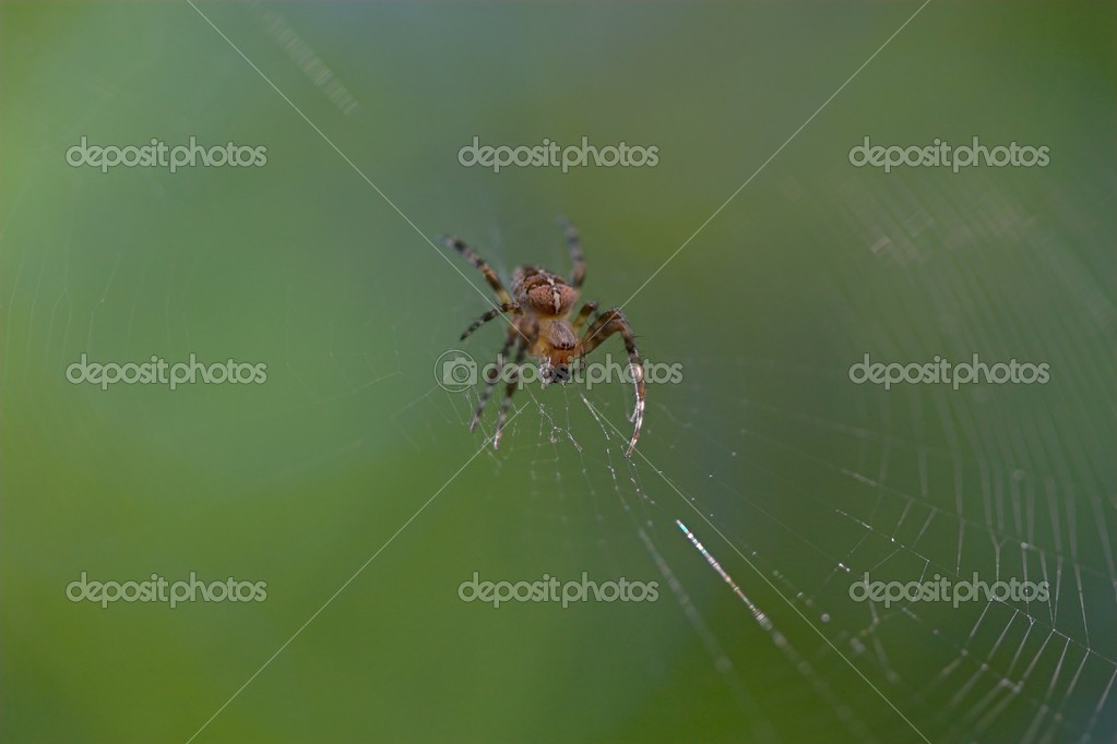 Closeup of a cross spider sitting in its web. — Stock Photo #9073419