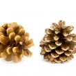 Two spruce cones — Stock Photo