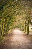 Sonbahar yolu — Stok fotoğraf
