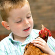 Little boy playing with his pet chicken — Stockfoto