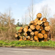 Royalty-Free Stock Photo: Logs