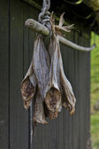 Stockfish hanging outside house — Stockfoto