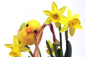 Yellow chicken on basket with flowers on white place — Stock Photo