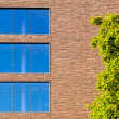 Windows in modern building with tree — Stock fotografie #9149607