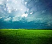 Bewolkte dag op groene grasland — Stockfoto