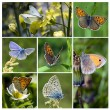Butterflies collage — Stock Photo
