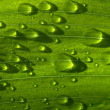 Rain drops on green grass — Stock Photo