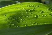 Gotas de chuva sobre a relva verde — Foto Stock