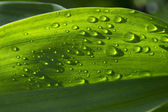Rain drops on green grass — Stock Photo