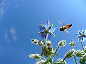 Makro-bild der honigbienen sammeln nektar — Stockfoto