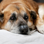 Old lazy dog — Stock Photo #9285099