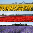 Colorful flower fields collage — Stock Photo