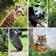 Zoo collage with six photos — Stock Photo #10493909