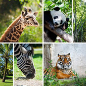 Zoo collage with six photos — Stock Photo