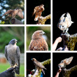 Raptor show zoo collage — Stock Photo