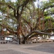 LahainBanyTree Park — Stock Photo #9121312