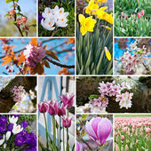Spring blossom flowers collage — Stock Photo