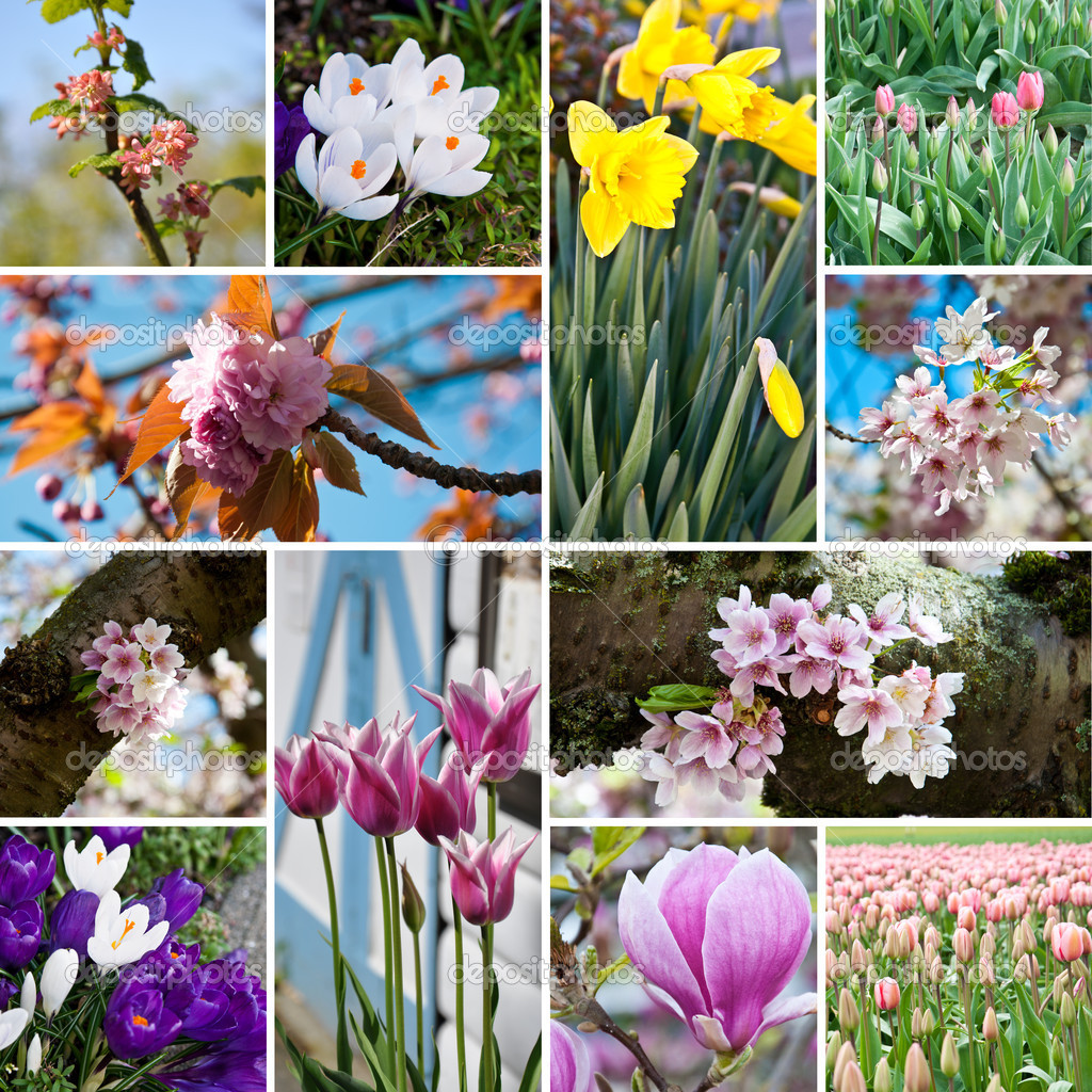Spring blossom flowers collage with twelve photos  Stock Photo #9627126