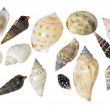 Seashells on a white background — Stock Photo