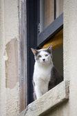 Domesticated cat — Stock Photo