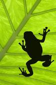 Treefrog — Stock Photo