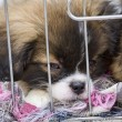 Puppies in a cage - Stock Photo