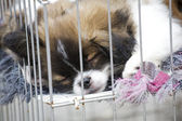 Puppies in a cage — Stock Photo