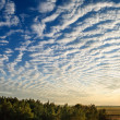 Cirrus Clouds Over The Forest. — Stock Photo