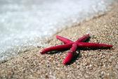 Hvězdice na tropické pláži — Stock fotografie